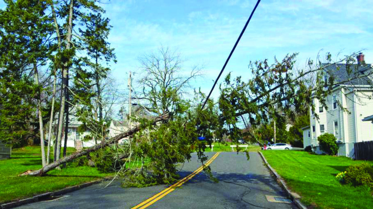4 Things to Do After a Windstorm
